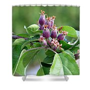 Promise Of Apples To Come Shower Curtain