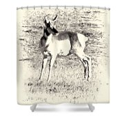 Pronghorn Angelope Shower Curtain