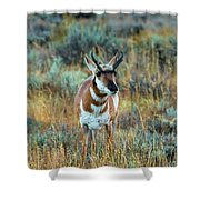 Pronghorn Antelope Amid Fall Foliage Wyoming Shower Curtain