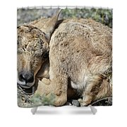 Pronghorn Antelope Fawn Shower Curtain