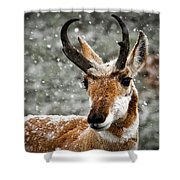 Pronghorn Buck In Snow - Yellowstone National Park Shower Curtain