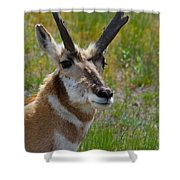 Pronghorn Buck Shower Curtain