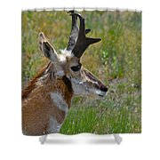 Pronghorn Buck Profile Shower Curtain by Karon Melillo DeVega