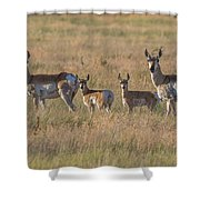 Pronghorn Fawns And Their Mothers Shower Curtain