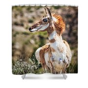 Pronghorn Mother Shower Curtain