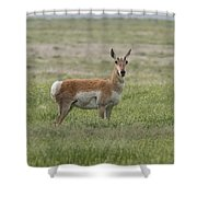 Pronghorn On The Plains Shower Curtain