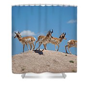 Pronghorn Scatter Shower Curtain