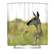 Pronghorn Shower Curtain