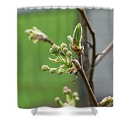 Prosperity Is Welcomed Shower Curtain