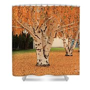 Prosser - Autumn Birch Trees Shower Curtain