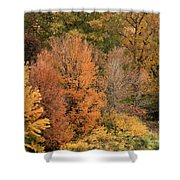 Prosser - Fall Foliage Shower Curtain