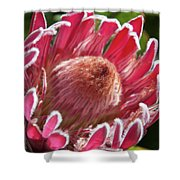 Protea Bloom Shower Curtain