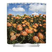Protea Blossoms Shower Curtain