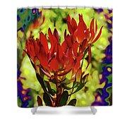Protea Flower 4 Shower Curtain