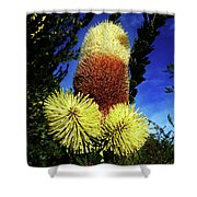 Protea Flower 5 Shower Curtain