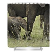 Protecting The Little One Shower Curtain