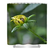 Protection From The Elements Shower Curtain