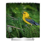 Prothonatory Warbler 9809 Shower Curtain