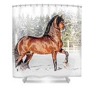 Proud Beauty Shower Curtain