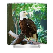 Proud Eagle Shower Curtain