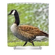 Proud Goose Shower Curtain