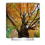 Proud Maine Tree In The Fall Shower Curtain