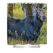 Proud Mama Moose Shower Curtain