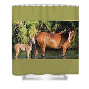 Proud Mare Shower Curtain