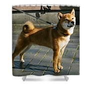 Proud Mary Shower Curtain