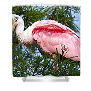Proud Papa Shower Curtain by Kenneth Albin