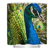 Preened And Proud Shower Curtain