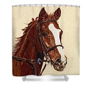 Proud - Portrait Of A Thoroughbred Horse Shower Curtain