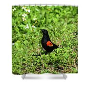 Proud Red-wing Shower Curtain