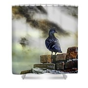 Proud To Be A Pigeon Shower Curtain