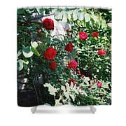Provence Red Roses Shower Curtain
