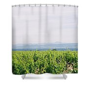 Provence Spring Vineyard Shower Curtain