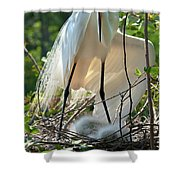 Providing A Little Shade Shower Curtain