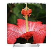 Provocative Hibiscus Shower Curtain