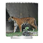 Prowling Tiger Shower Curtain