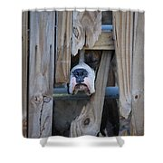 Psst Help Me Outta Here Shower Curtain by DigiArt Diaries by Vicky B Fuller