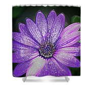 Psychedelic Purple Petals  Shower Curtain