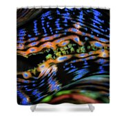 Psychedellic Clam Shower Curtain