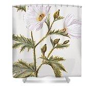 Pua Kala Flower Shower Curtain
