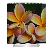 Pua Melia Plumeria Kuulei Haiku Shower Curtain