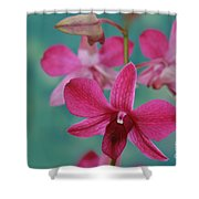 Puanani Kealoha Dendrobium D Burana Red Flame Hawaiian Orchid Shower Curtain