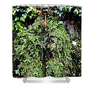 Public Fountain In Palma Majorca Spain Shower Curtain