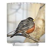 Puffed Robin Shower Curtain