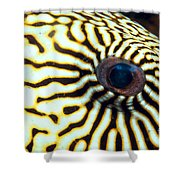 Pufferfish Shower Curtain