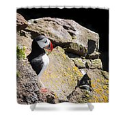 Puffin And Rocks Shower Curtain