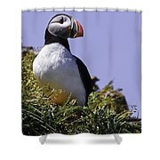 Puffin On The Rock Shower Curtain